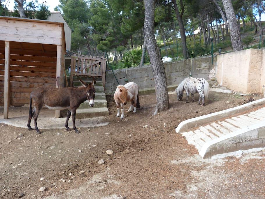 Nos 2 poneys et notre ânesse.