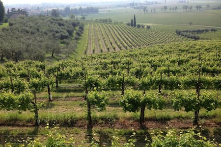 Prosecco, Alps and Venice B&B - Susegana - Talo