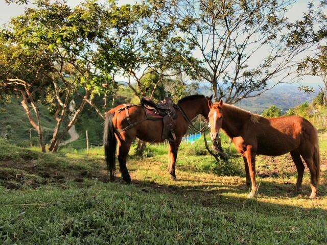 Disfruta de nuestros caballos.