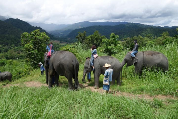 Thai Elephant Home (Long Stay Program 7D 6N)