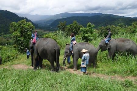 Thai Elephant Home (Long Stay Program 7D 6N)