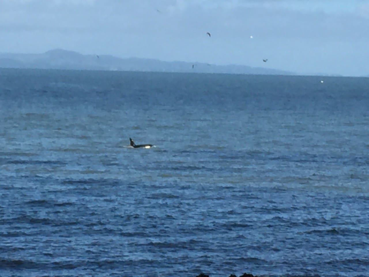 Yes, we see interesting marine life.  Orcas are regular visitors.