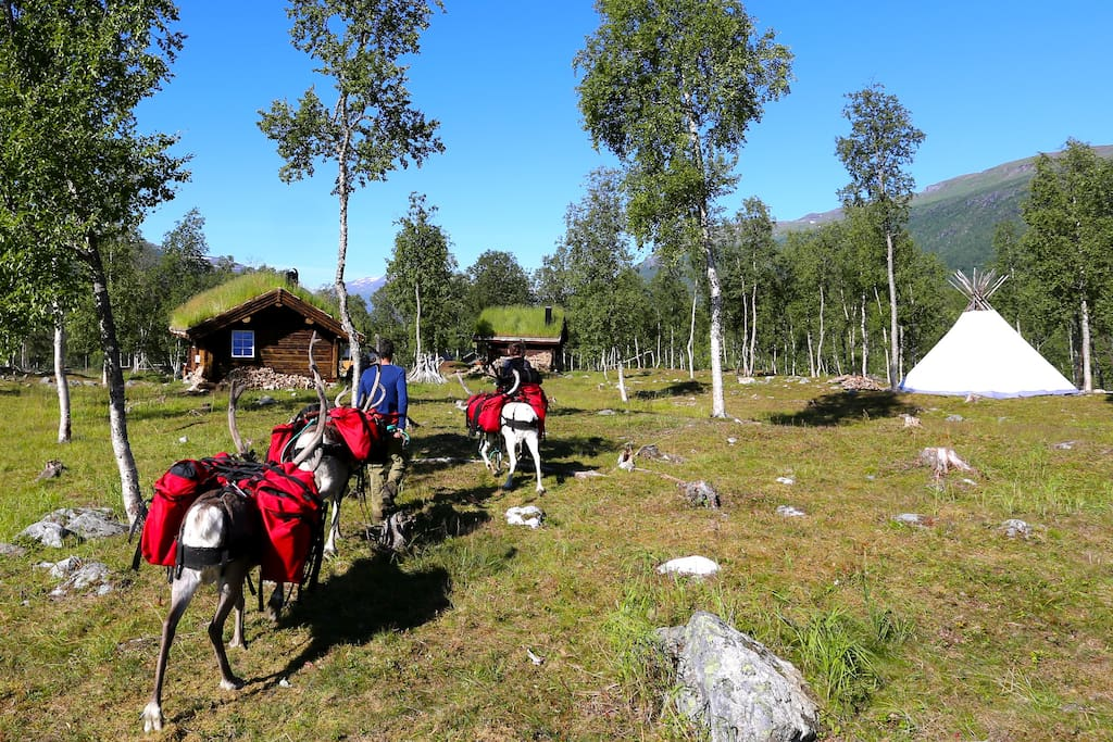 We offer reindeer-trekking into the Rohkunborri national park from july to oktober