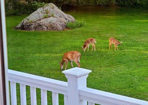 Deer Run Apartment