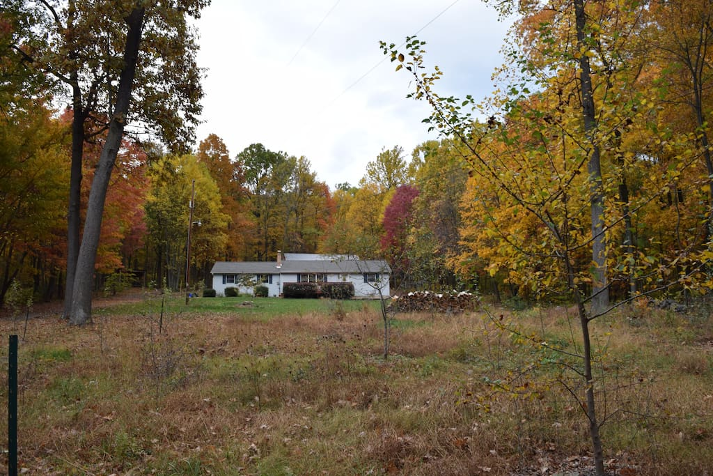 Whole Home Wooded Serenity Urban Proximity Houses For