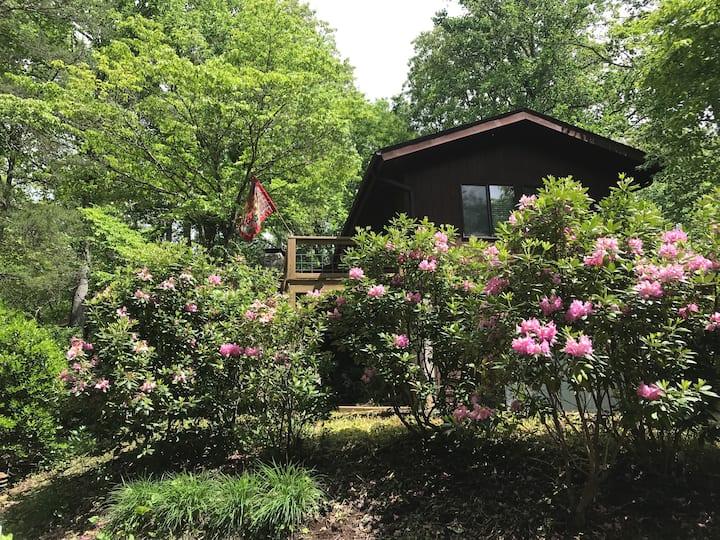 Blue Ridge Cabin at 3400' near Asheville & Hiking