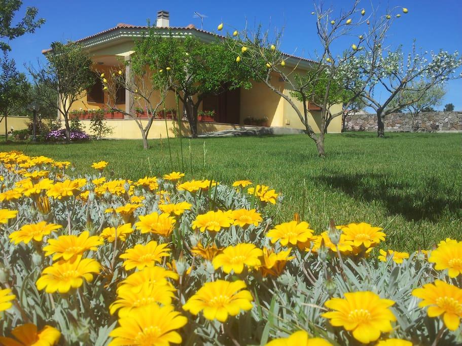 Giardino con piante e fiori
