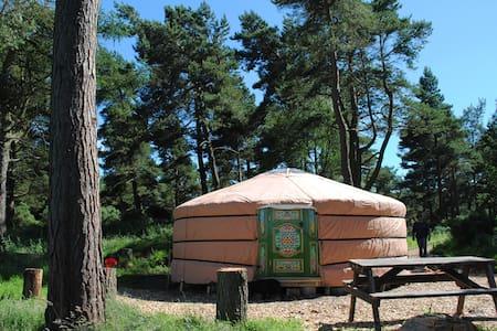 Penbedw Yurt 2 - Mold - Rundzelt