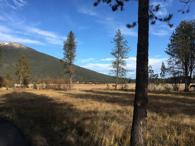 Black Butte Ranch-dog friendly-Paulina Spring area