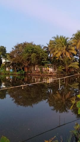 Cochin mangrove home stay