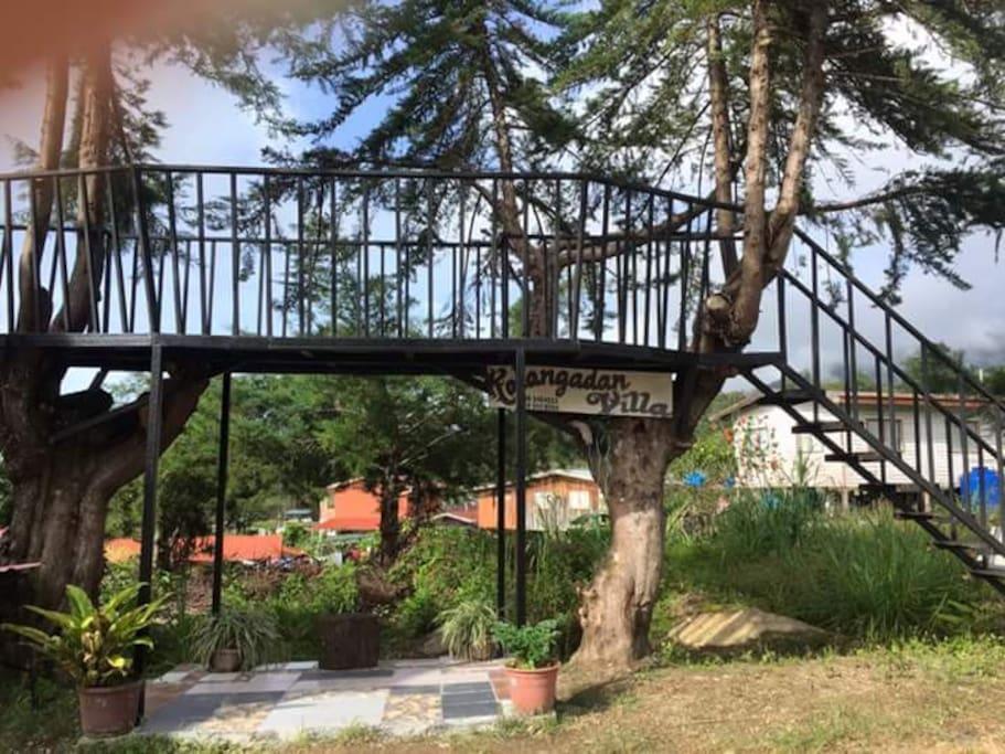 Tree Veranda