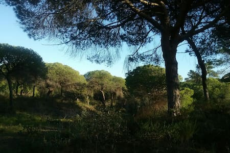 Camperplaats in de zonnige Algarve - Almancil - Annat