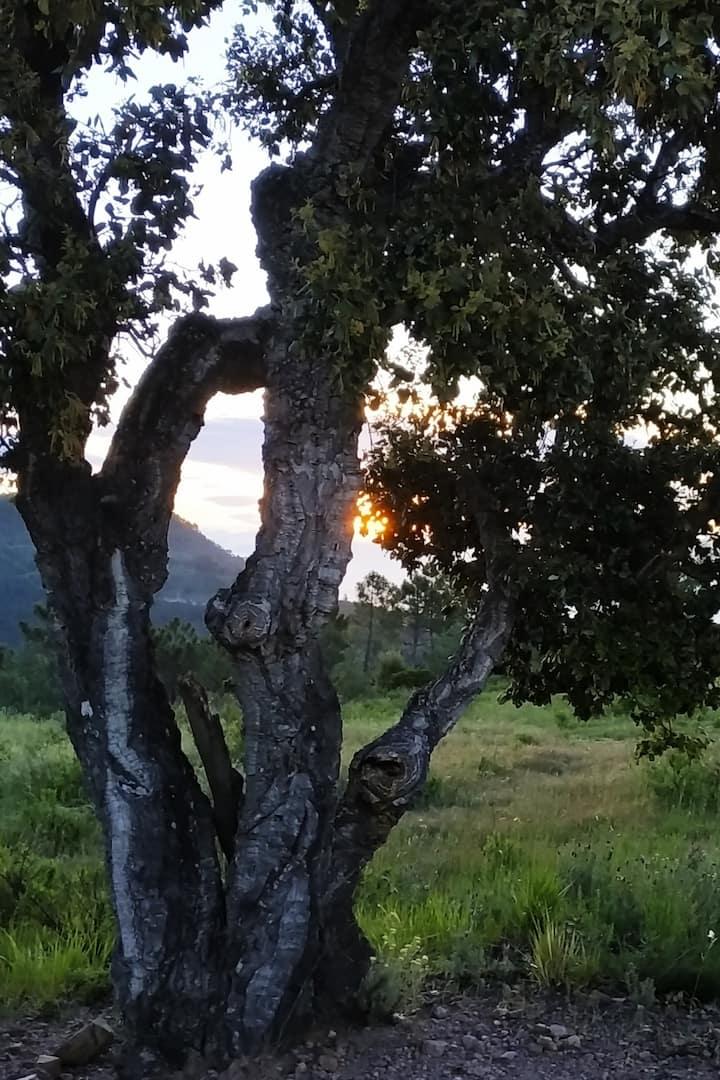 Lever de soleil et chêne liège...
