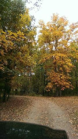 Driveway to the house with hickory trees ablaze in fall colors.