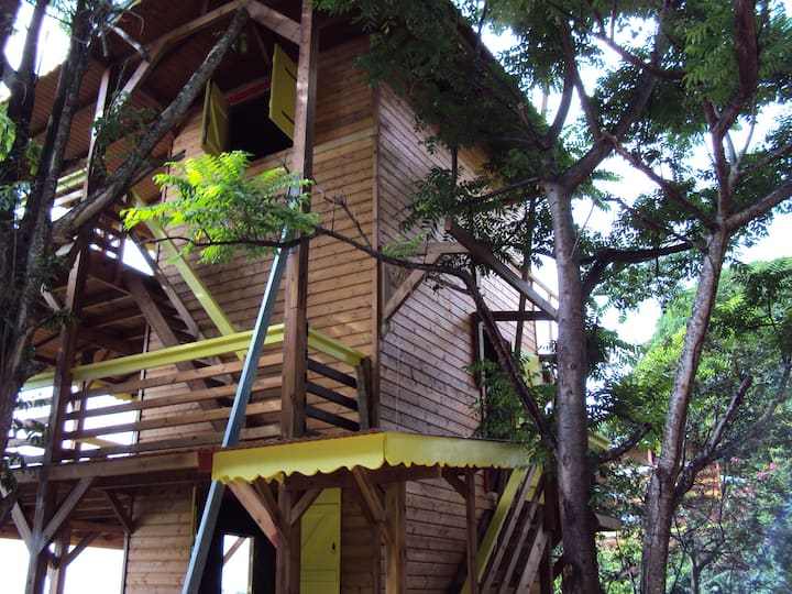 Guadeloupe-Paradisio Talipo