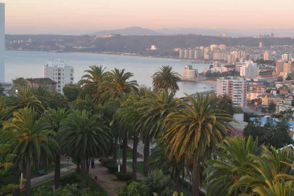 old square palms  and Viña del mar view.
