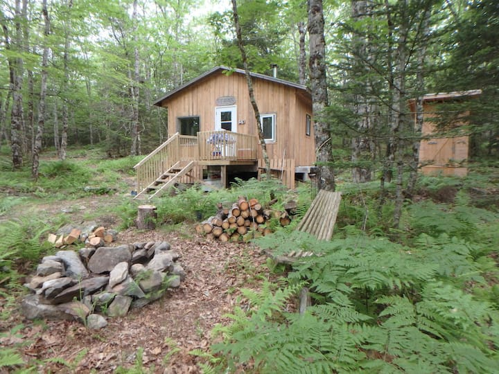 The Shack---an ideal off-grid forest experience
