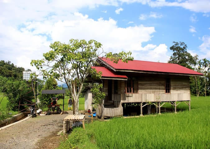 Side of lodge, surrounded by paddy fields