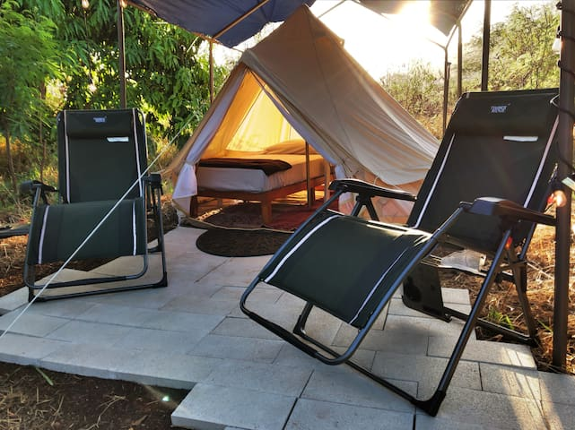Coconut Glamp Site - Mango Orchard