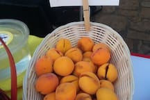 Apricots from the AG house at Market on the Plaza in Mt. Village/Telluride, Summer Season 2019.