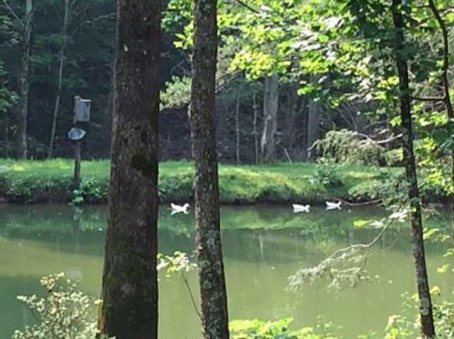 Duck Pond Mountain Retreat w/stream - Marion - Casa