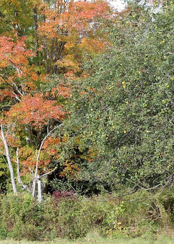 Some of the beautiful forest foliage you'll see if you visit in the fall.