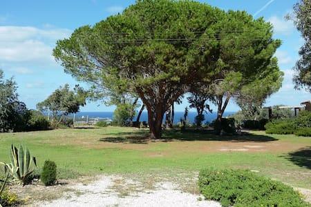 Vignola 1 - Province of Olbia-Tempio