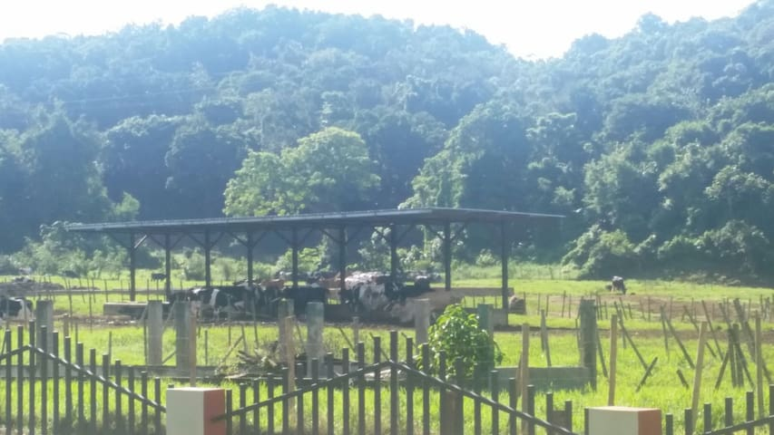 Country living close to beaches - Quebradillas, Quebradillas, PR - Apartmen