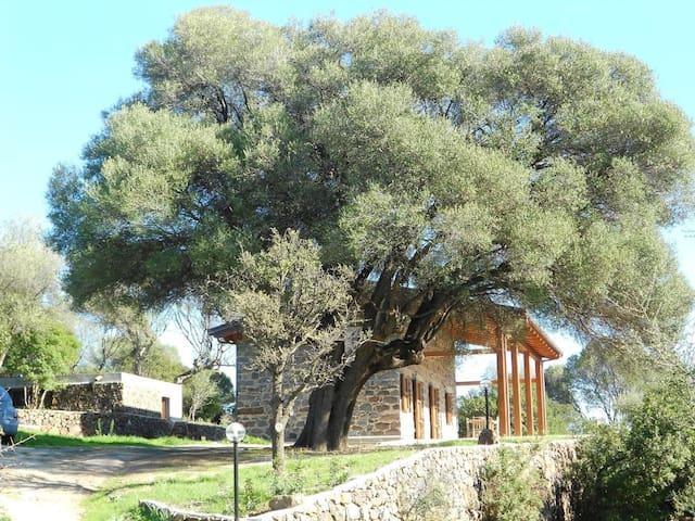 Deliziosa casa nella campagna - Cala Gonone - Apartamento