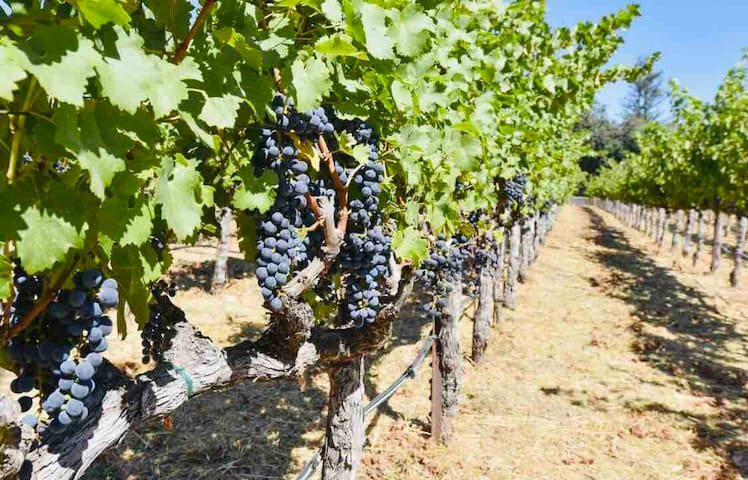 Napa wine country house 3bd(1)