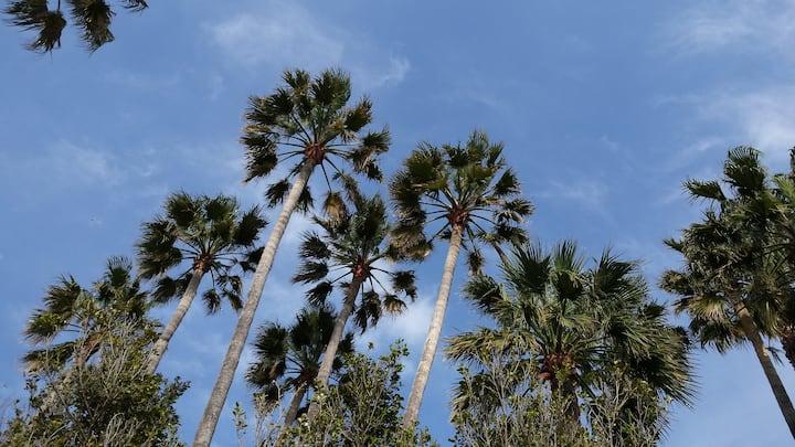 La mythique croisette et ses palmiers
