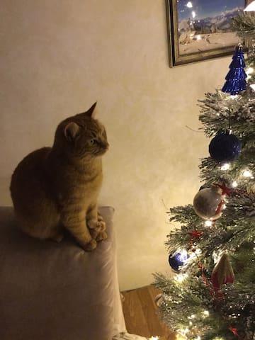 Our cat Zander.