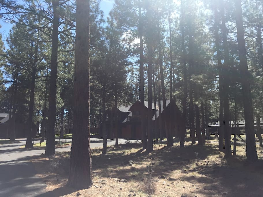 Situated in the pines.