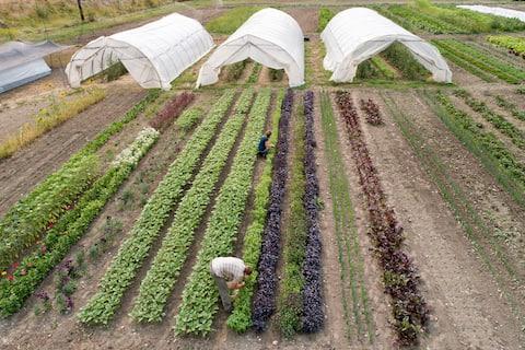 Terra Firma Farms Guest Suite