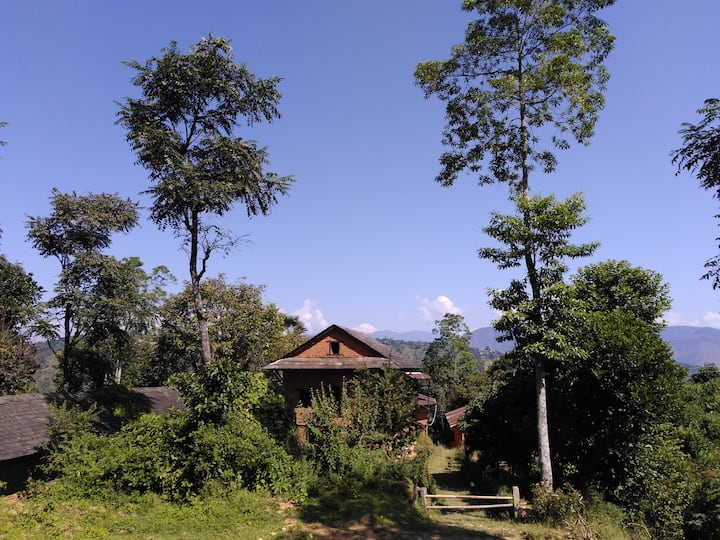Rishikesh highland organic coffee farm