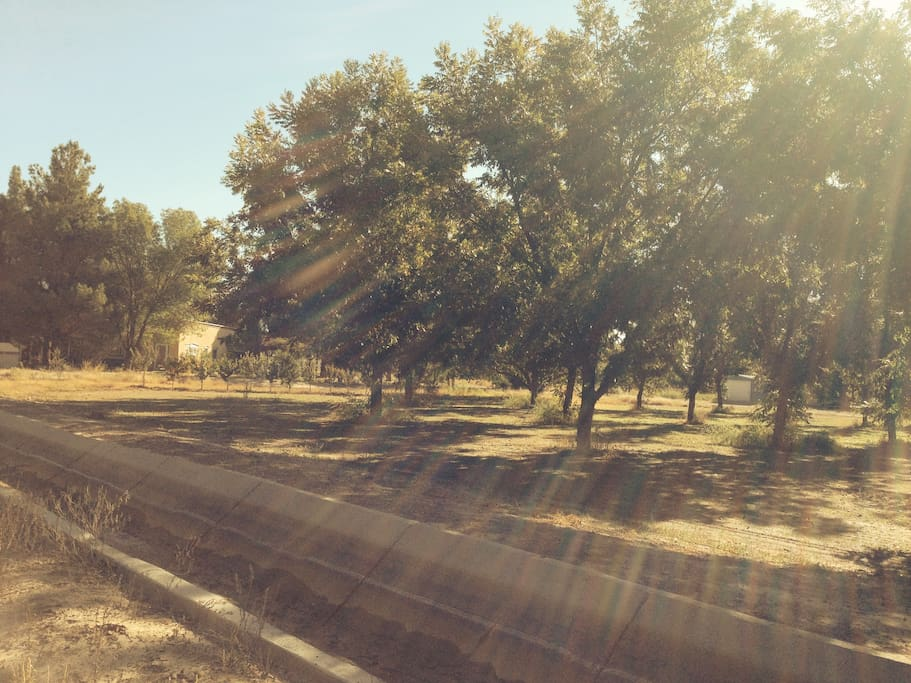 Pecan Orchards