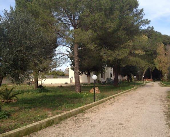 All'ombra dei pini e gustando vino Primitivo - Manduria - Lakás