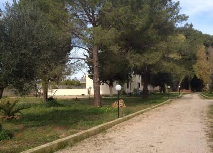 All'ombra dei pini e gustando vino Primitivo - Manduria