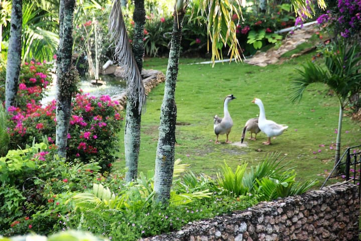 Our house geese Gershwin and Greta