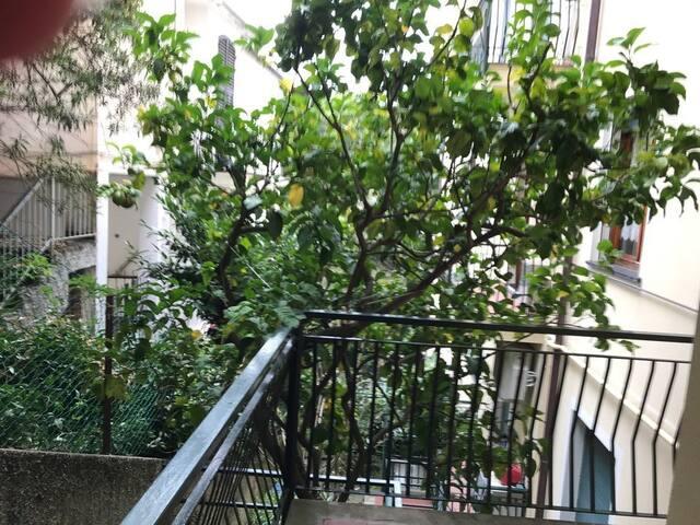 Littorno House CODICE CITRA 010037-LT-0010