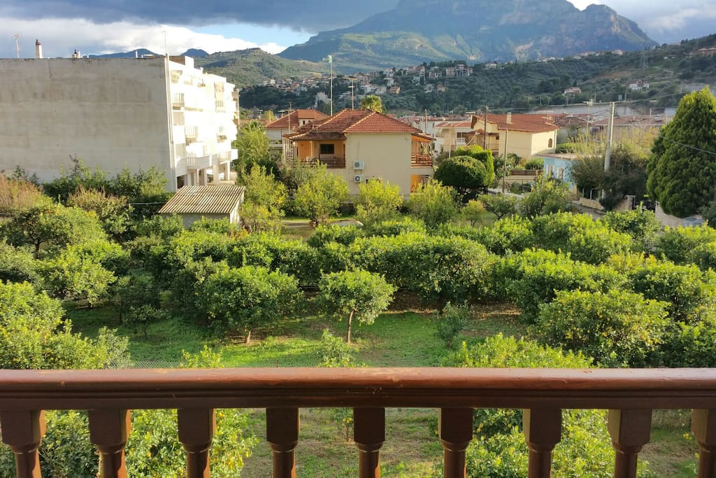 Lemon and orange trees right below the balcony