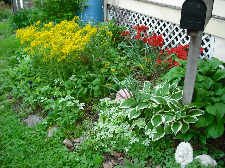 Front summer garden
