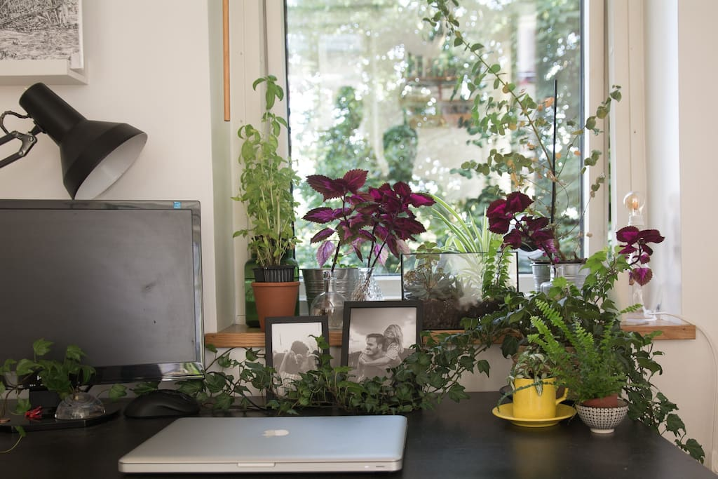 Desk/workspace with lots of greenery