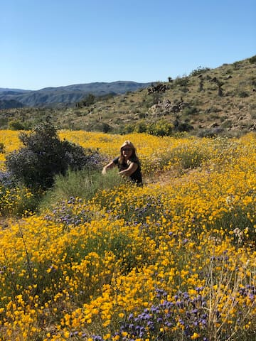 Our beautiful superbloom in the park.