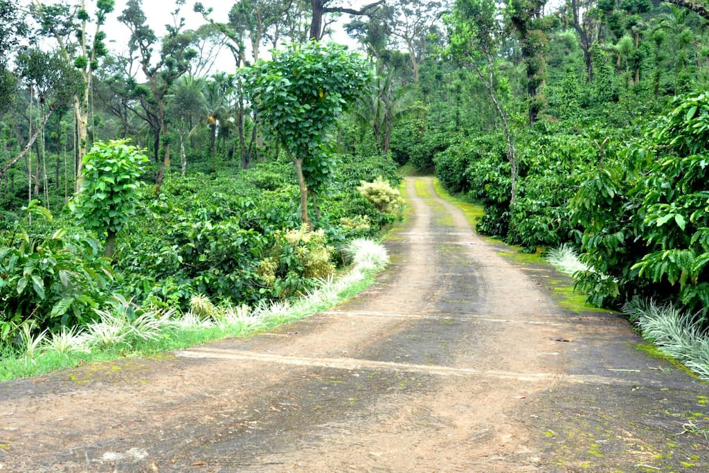 road to the home stay