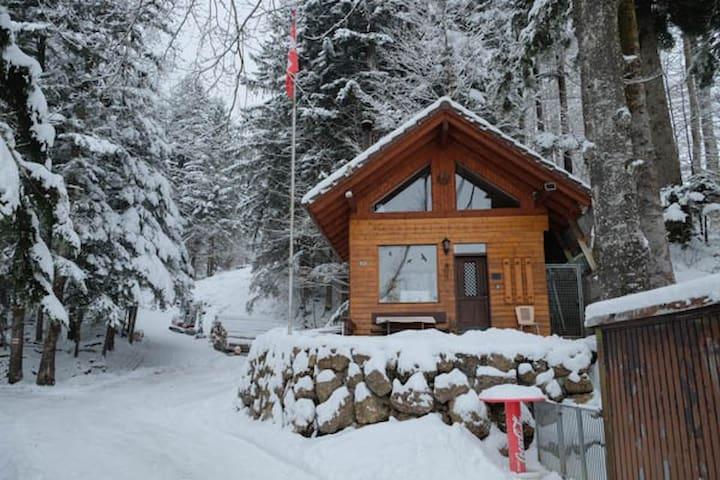 WolfDen Mountain Cabin