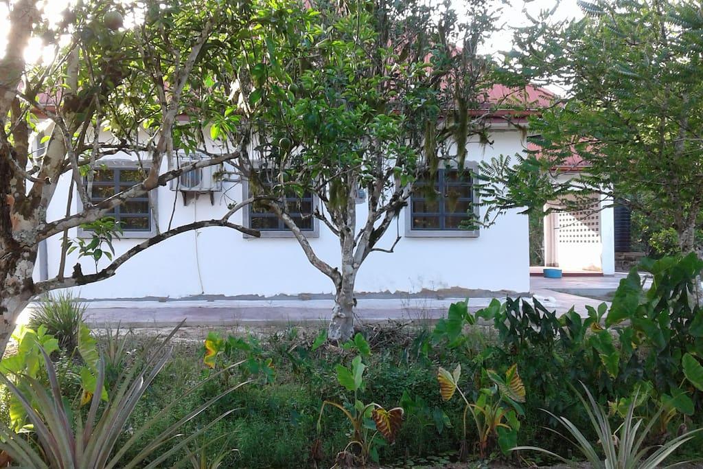 Wonen midden in de Surinaamse natuur