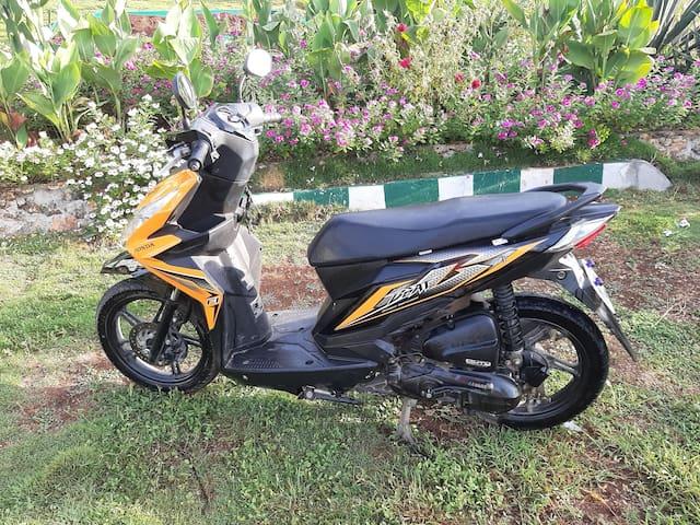 Honda Beat 300p a day