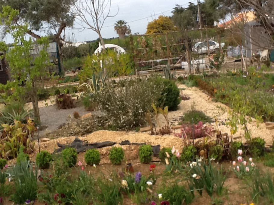 The making of the dry garden