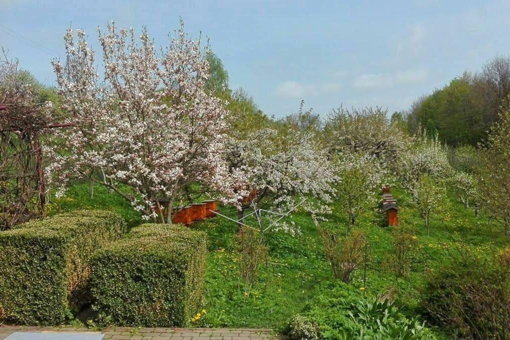 Ogród wiosną Spring garden